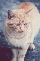 Neighbor Cat 1. by TheZoMbieMoshPiT