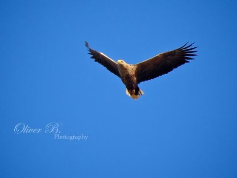 Majestic I by OliverBPhotography