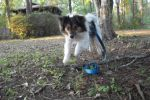 I'll use my own four feet by Colliequest