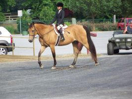 Horse show stock 13 by shush-stock