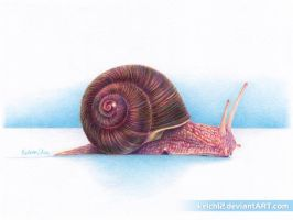 Snail's Pace by kelch12