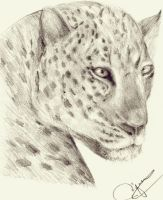 female leopard by mady21v