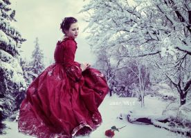 A Red Rose in the Snow by annewipf