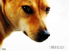 Mico- Portrait 1 by picklenation