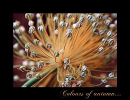 Colours of autumn by Nataly1st