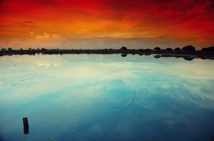 Reflected colours by pmsmgomes