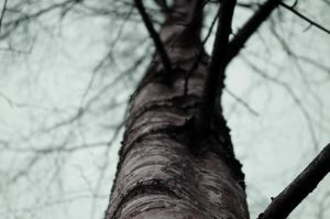 scars of the tree by voluptuousv0id