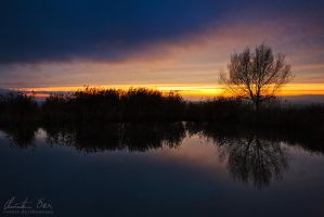 Calm tree by Nightline