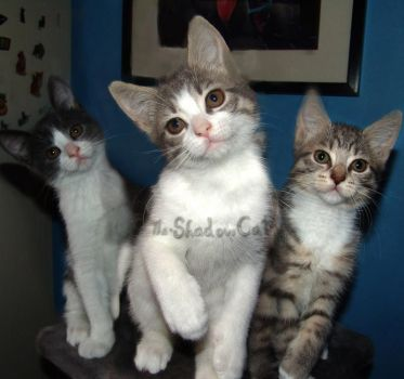 Kittens Looking For a New Home by ToygerCat