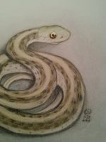 25:30  Eastern garter snake (photo) by bunnykissd