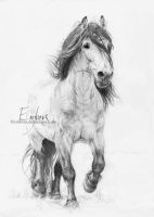 Dole Horse by Embers