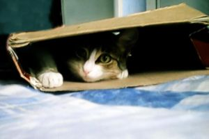 Cat - Box by pattsy