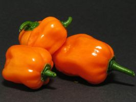 Habanero 4 by Stratege