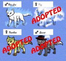 Wolf adoptables 10 by 32d