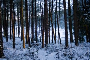 Snowy Woodland 18 by joannastar-stock