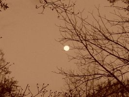 Sepia Moonlight by CommentrArtist26