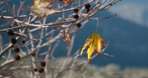 Lonely Leaf by Steve8777