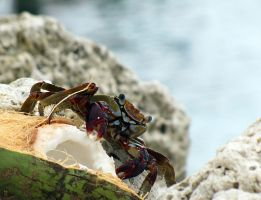 Crab and the Coconut by phantaz