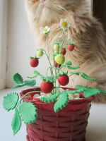 Strawberry in pot by mar-rie