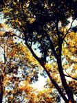 Autumn Trees by LadyAriessTemptra