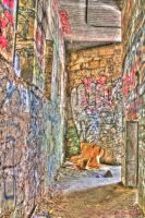 Zoo Cage Hallway Graffiti HDR by RavenA938