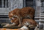 Lovers - Leopard by DidIReallyDoThat