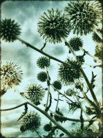 Thistles in Bloom by rawimage