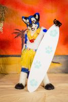Surfer Cat by LuxuryCat