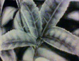 Leaves: Pen Study by supersonicartdrawer