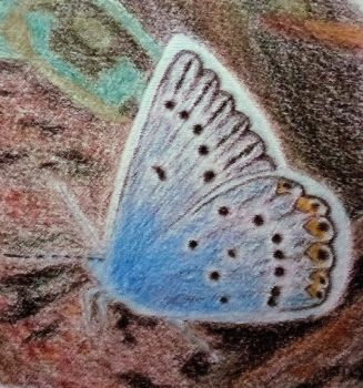 Blue Butterfly by Catonia