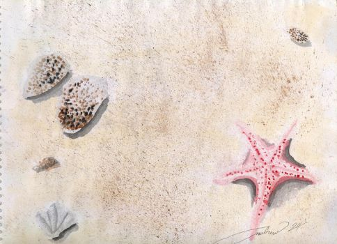 seashells in the sand by werdna24