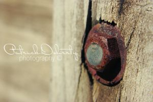 Macro Untitled 2 by TrickD123