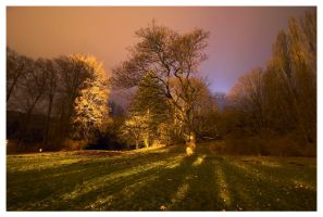 In the park at night.. by Roman89