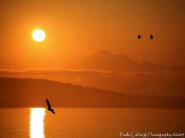 Sunrise in Anacortes by La-Vita-a-Bella