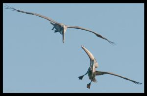 Pterodactyls 1 by wetdog969