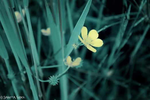 ~ yellow flower by peaceme