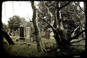 Down in the graveyard by Estruda