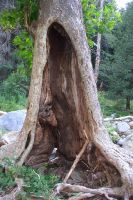 Hollow Tree Trunk 2 by Hopdoco