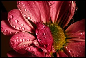 Little bubbles of pink by dimebagsdarrell