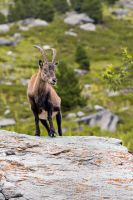 Ibex-eyed by ludovicjamet