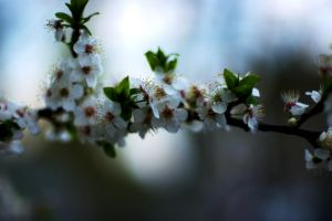 Spring tree by Molot