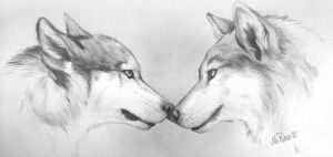 wolf couple by Mirnamiu