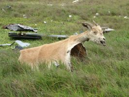 Chivo-carpa by Sillycious