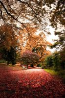 Leaves fall by ErhanS