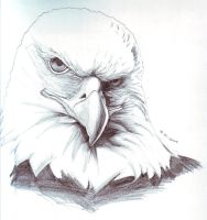 Eagle1 by FATRATKING