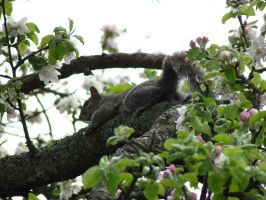 Squirrel by sifreeman