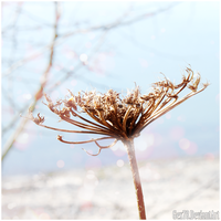 Dead Flower by Gex78