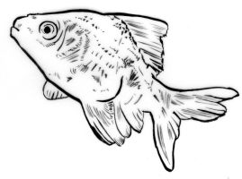 Illustration - Line triptych - Goldfish by TheLipGlossary