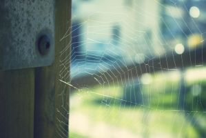 Memories' web by AlicevsAlice
