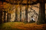 beneath the branches by tassyj